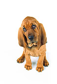 PUP 21 RK0039 05