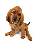 PUP 21 RK0039 21