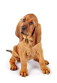PUP 21 RK0039 25