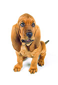 PUP 21 RK0039 27