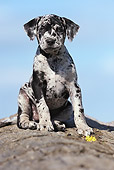 PUP 21 SS0003 01