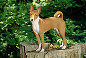 PUP 21 CE0002 01