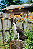 PUP 21 CE0003 01