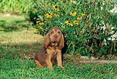 PUP 21 CE0005 01