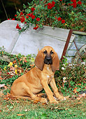PUP 21 CE0006 01