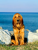 PUP 21 CE0007 01