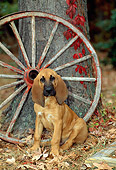 PUP 21 CE0010 01