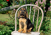 PUP 21 CE0011 01