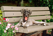 PUP 21 CE0015 01