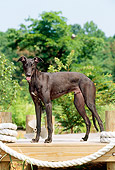 PUP 21 CE0019 01
