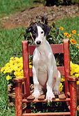 PUP 21 CE0020 01