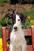 PUP 21 CE0022 01