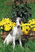 PUP 21 CE0023 01