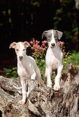 PUP 21 CE0026 01