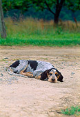 PUP 21 CE0028 01