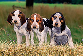 PUP 21 CE0030 01