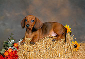 PUP 21 FA0003 01