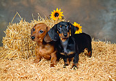 PUP 21 FA0004 01