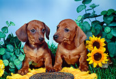 PUP 21 FA0005 01