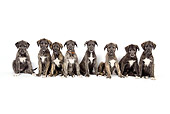 PUP 21 JD0001 01