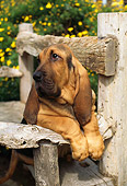 PUP 21 RC0002 01