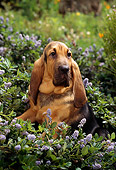 PUP 21 RC0005 01