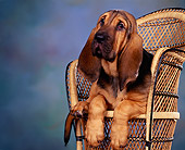 PUP 21 RK0002 02