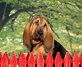 PUP 21 RK0004 01