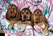 PUP 21 RK0018 03