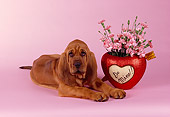 PUP 21 RK0038 03