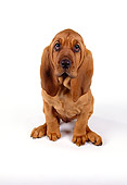 PUP 21 RK0039 23