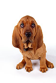 PUP 21 RK0039 24