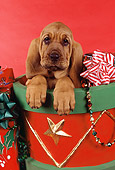 PUP 21 RK0047 01