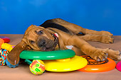 PUP 21 RK0055 01