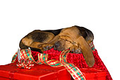 PUP 21 RK0060 01