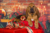 PUP 21 RK0061 01