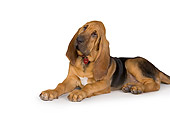 PUP 21 RK0062 01