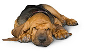 PUP 21 RK0068 01