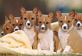 PUP 21 SS0002 01