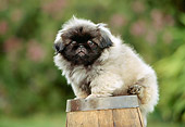 PUP 22 RK0007 11