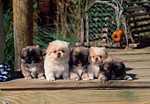 PUP 22 CE0008 01