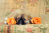 PUP 22 RC0003 01