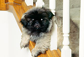 PUP 22 RK0004 01
