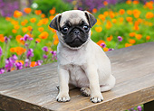 PUP 23 BK0002 01