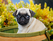 PUP 23 BK0005 01