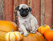 PUP 23 BK0006 01
