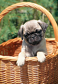 PUP 23 CE0015 01