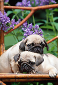 PUP 23 CE0017 01