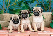 PUP 23 CE0018 01