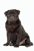 PUP 23 JE0003 01